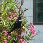 The tui checking the flax